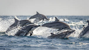 A seachange needed in fisheries to give dolphins, whales and porpoises a chance