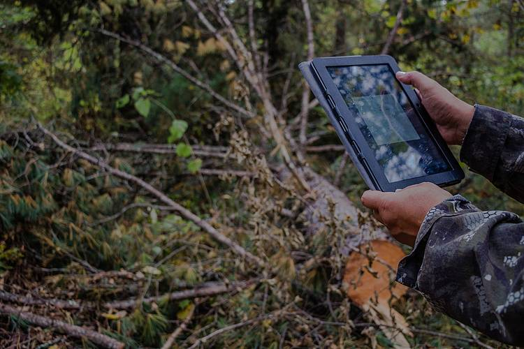 Cutting-edge forest monitoring technology leads the way to smarter forest management in Russia