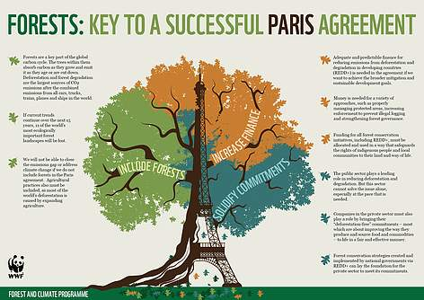 Forest and climate change | WWF