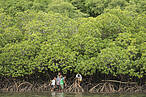 Fijian boys from Mali Island walk into mangrove roots to look for crabs. © Jürgen Freund