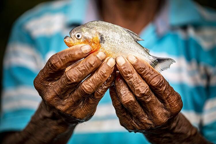 World's forgotten fishes vital for hundreds of millions of people but one-third face extinction, warns new report