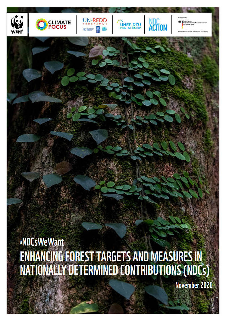 #NDCsWeWant: Enhancing forest targets and measures in Nationally Determined Contributions (NDCs)