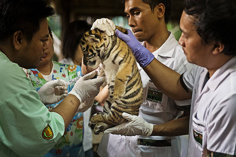 Wildlife Crime Initiative | WWF