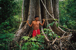 Amazon, Brazil, Roraima Province. Yanomami hunter with bow and arrow by a tree in rainforest near to Demini Molaca, Roraima Province,Amazon, Brazil.