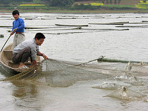 Villagers with floating fish cages in restored polder. Fish production is more lucrative and less labore intensive than the rice production that it replaced. Village income increased fourfold in 3 years following the project. Flood risk to the 4 million people in this region has been reduced by the WWF project to restore polders like this to Dongting Lake.