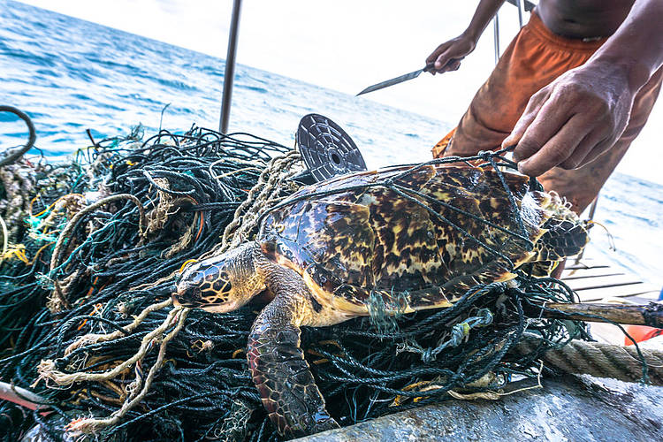 "New report from WWF says abandoned fishing gear an ""immortal menace"" which must be central in the fight against plastic pollution."