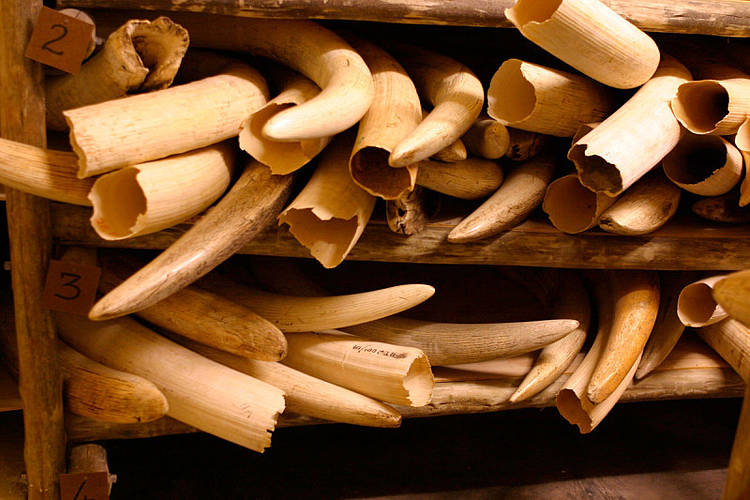 China Ivory Consumption Research 2019