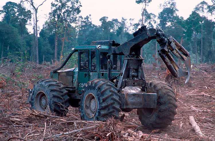 World can still act against alarming deforestation rates