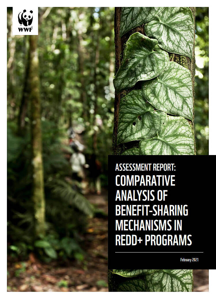 Assessment Report: Comparative Analysis of Benefit-Sharing Mechanisms in REDD+ Programs